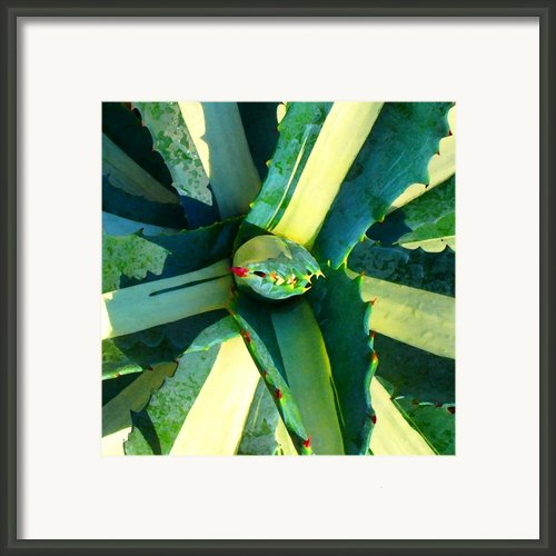 Succulent Square Close-up 6 Framed Print By Amy Vangsgard