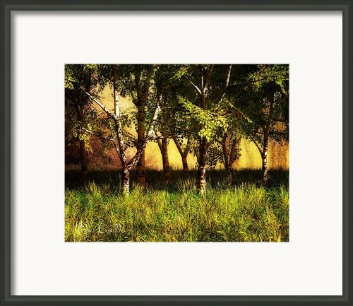 Summer Birch Trees Framed Print By Bob Orsillo