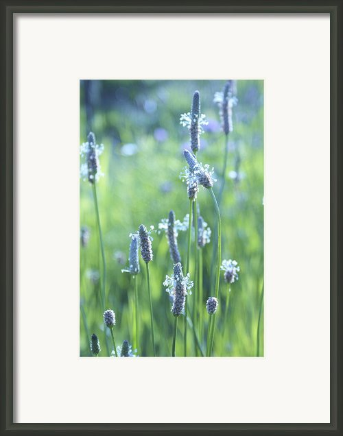 Summer Charm Framed Print By Aimelle