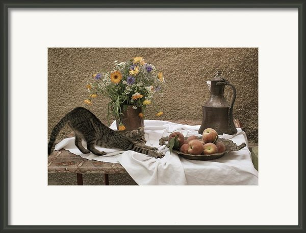 Summer Composition With Cat Framed Print By Floriana Barbu