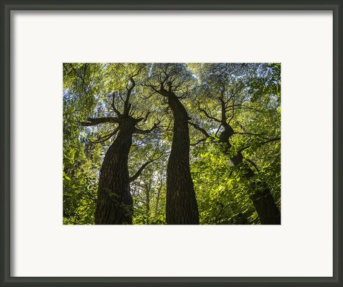 Summer Mood Framed Print By Vladimir Kholostykh