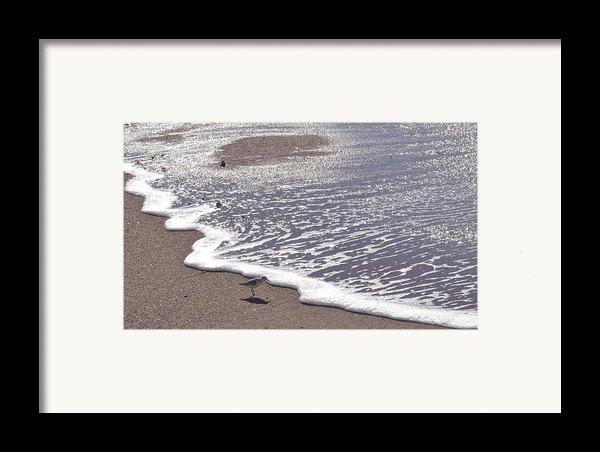 Summer Shimmer Framed Print By Cindy Lee Longhini
