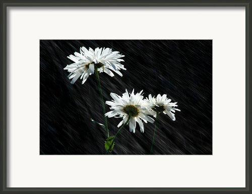 Summer Showers Framed Print By Barbara  White