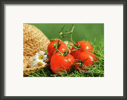 Summer Tomatoes Framed Print By Sandra Cunningham