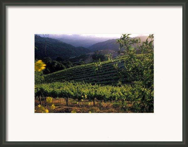 Summer Vineyard Framed Print By Kathy Yates