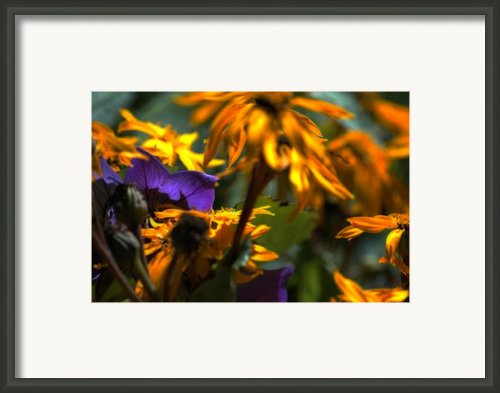 Summer Wanes Framed Print By Ross Powell