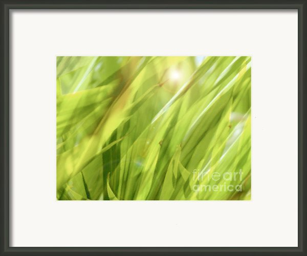 Summertime Green Framed Print By Ann Powell