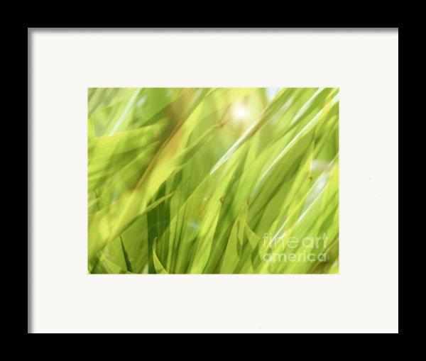 Summertime Green Framed Print By Ann Powell