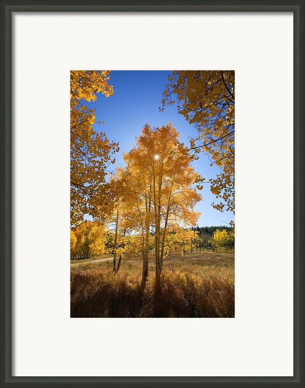 Sun Through Aspens Framed Print By Ron Dahlquist - Printscapes