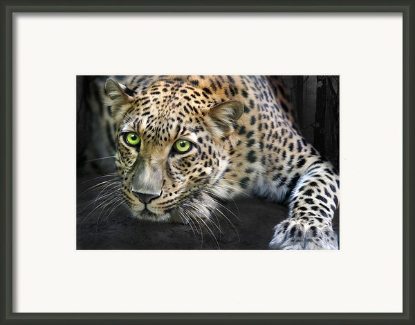 Sundari Framed Print By Big Cat Rescue