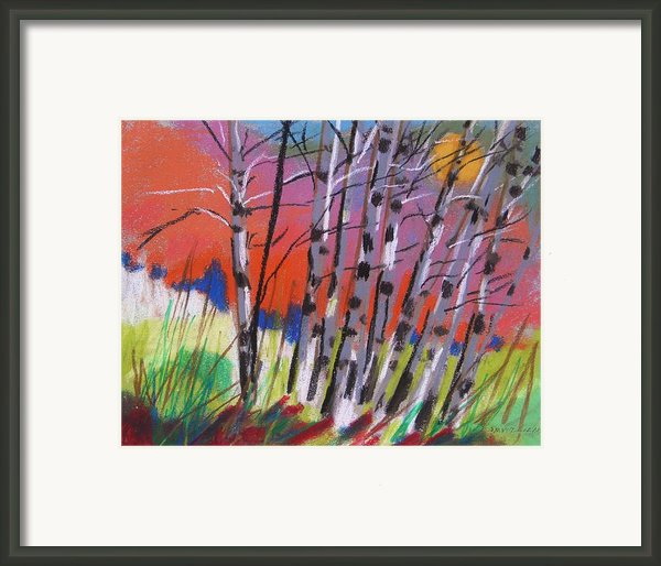 Sundown White Birches Framed Print By John  Williams