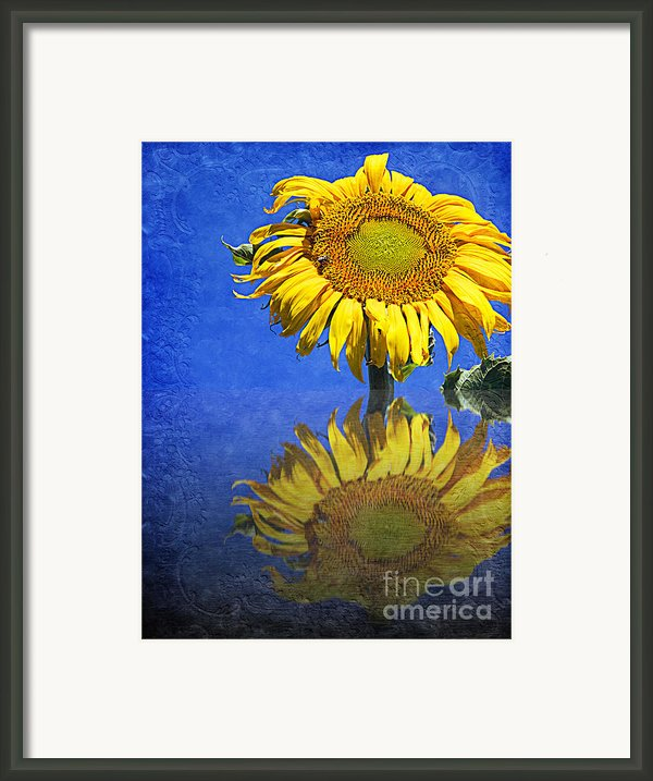 Sunflower Reflection Framed Print By Andee Photography
