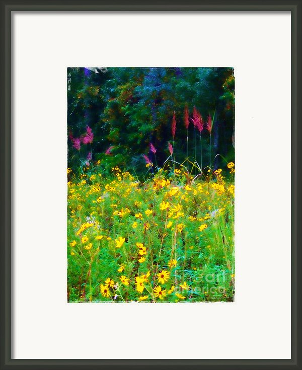 Sunflowers And Grasses Framed Print By Judi Bagwell