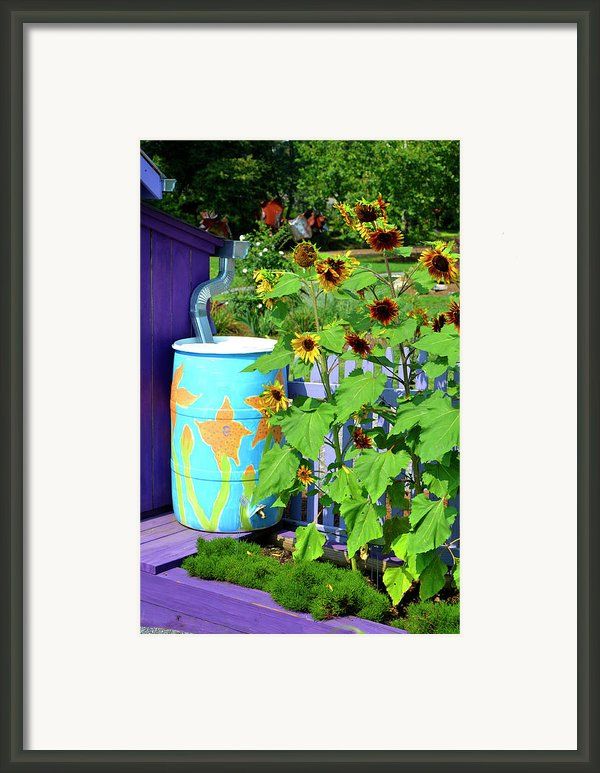 Sunflowers Framed In Purple Framed Print By Paul Mashburn