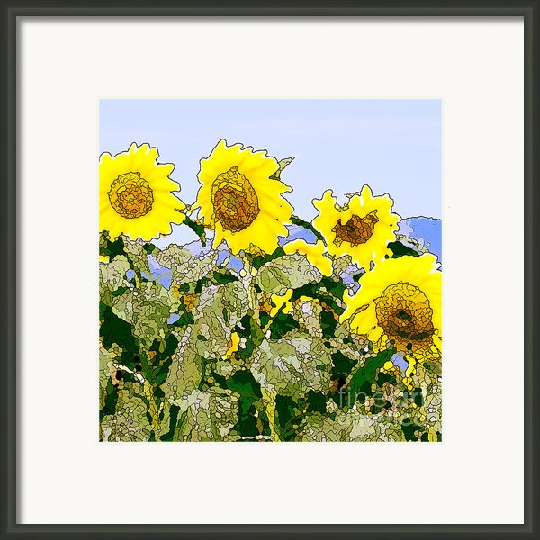 Sunflowers Sunbathing Framed Print By Artist And Photographer Laura Wrede
