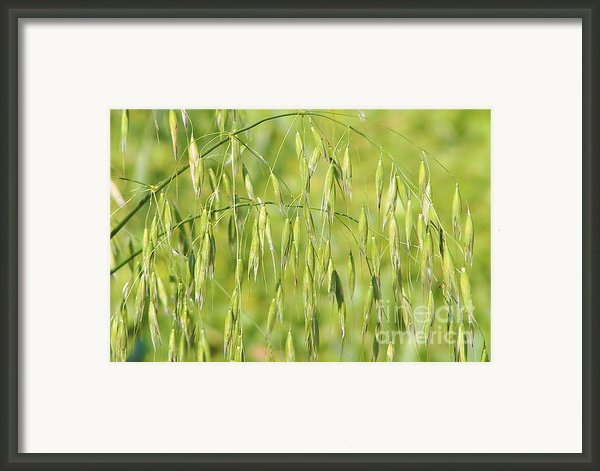 Sunny Day At The Oat Field Framed Print By Christine Till