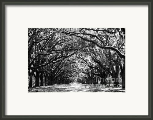Sunny Southern Day - Black And White Framed Print By Carol Groenen