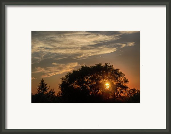 Sunset At The Oasis Framed Print By Joan Carroll
