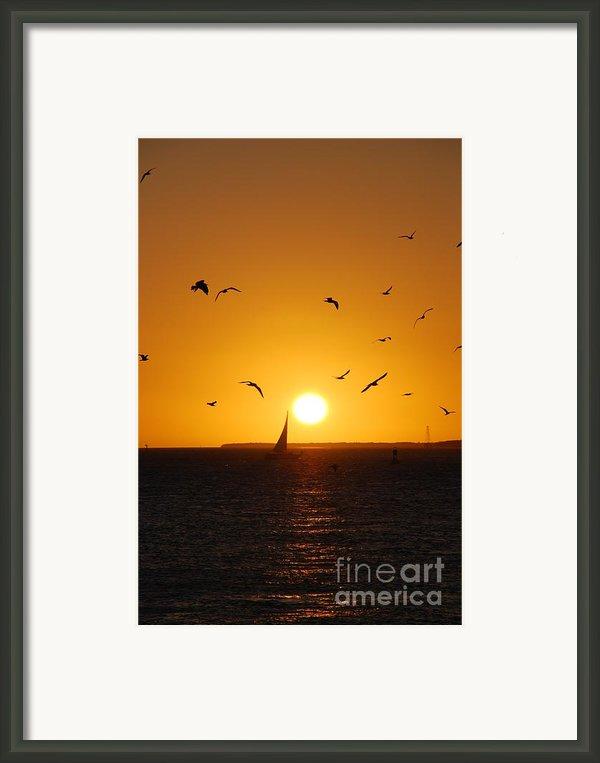 Sunset Birds Key West Framed Print By Susanne Van Hulst