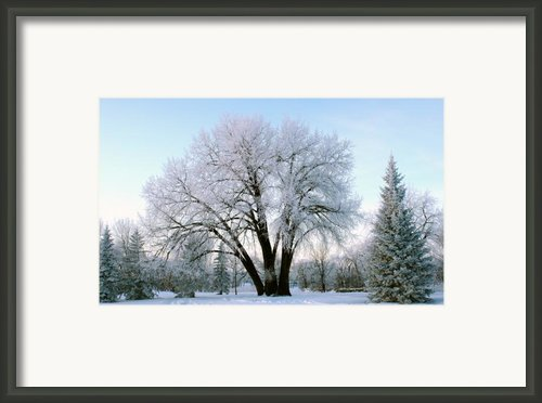 Sunset Frost Framed Print By Steve Augustin