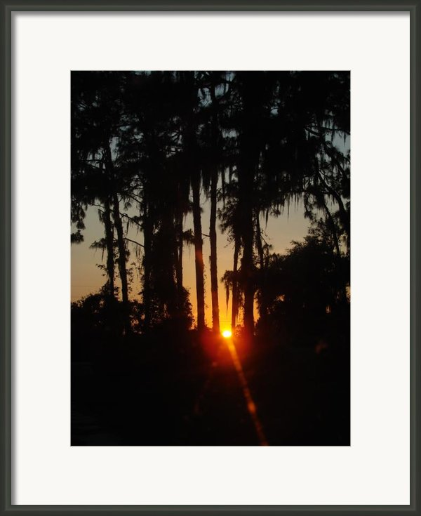 Sunset In The Woods Framed Print By Kimberly Camacho