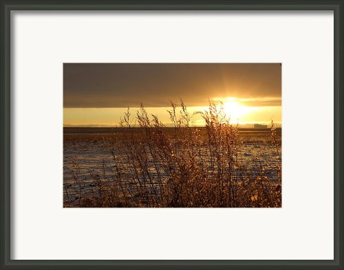 Sunset On Field Framed Print By Christy Patino