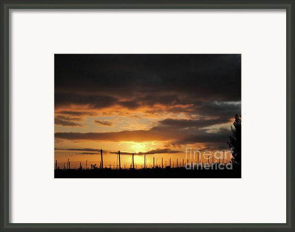 Sunset On The Vineyards Framed Print By Nancy Chambers