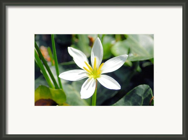 Sunshine Framed Print By