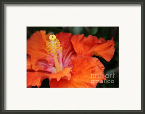 Surrender Framed Print By Sharon Mau