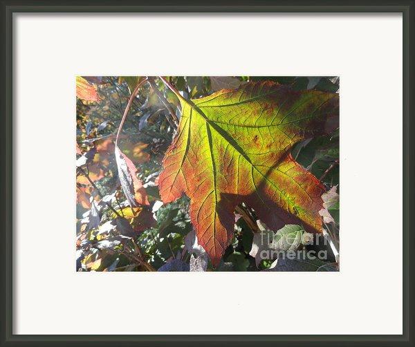 Surrender Framed Print By Trish Hale