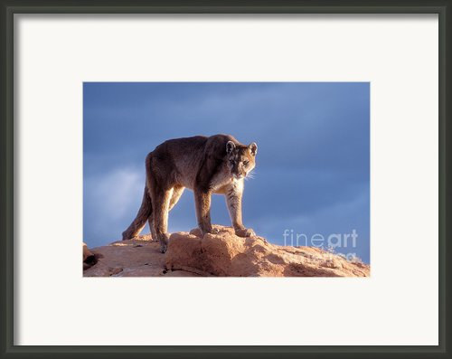 Surveying The Territory Framed Print By Sandra Bronstein