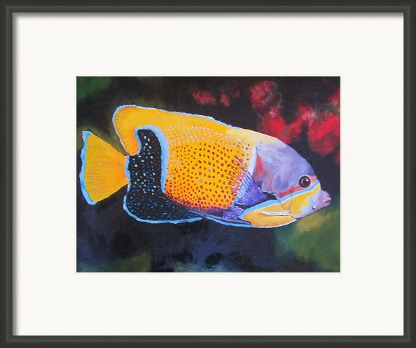 Sutton Fish Framed Print By Terry Gill