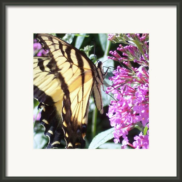 Swallowtail Framed Print By Anna Villarreal Garbis
