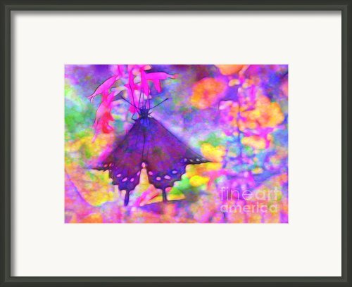 Swallowtail Framed Print By Judi Bagwell