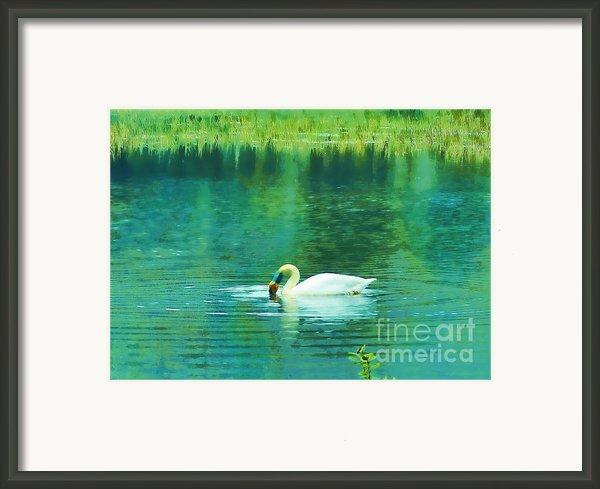 Swan Lake Framed Print By Judi Bagwell