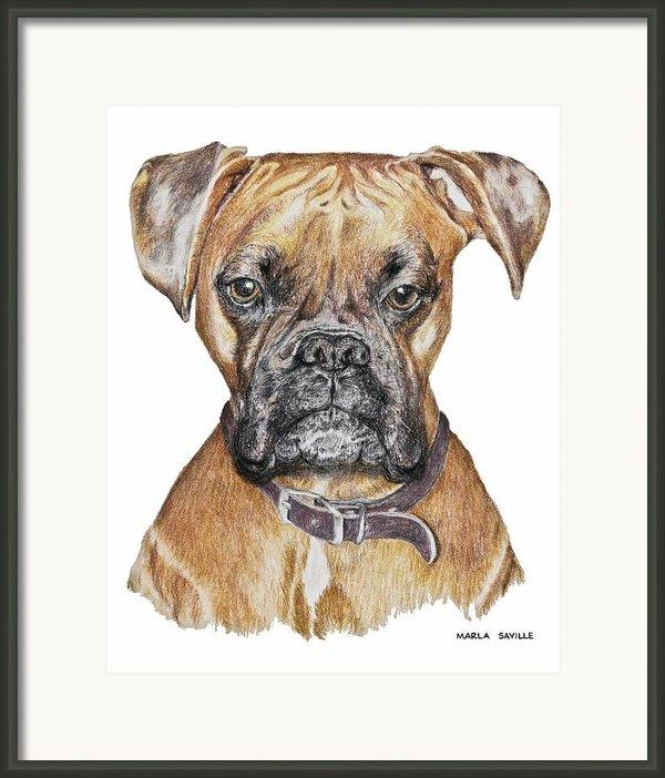Sweet Boxer Framed Print By Marla Saville