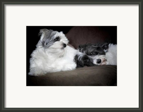Sweet Couple Framed Print By Gun Legler