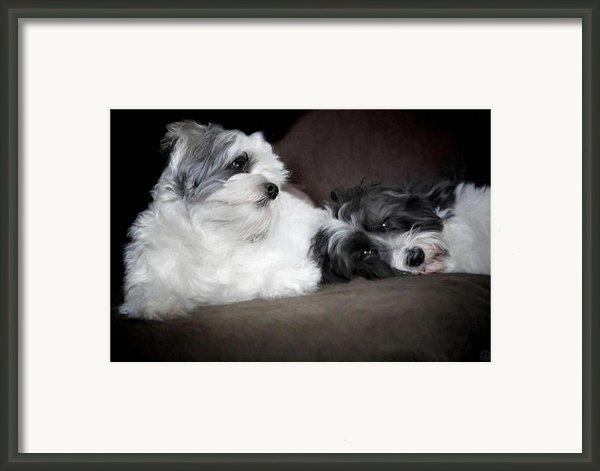 Sweet Couple Framed Print By Gun Legler