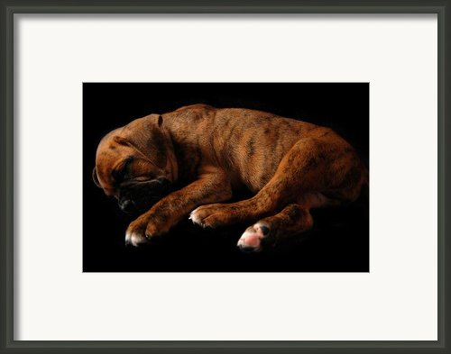 Sweet Dreams Puppy Framed Print By Angie Mckenzie