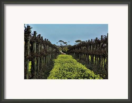 Sweet Vines Framed Print By Douglas Barnard