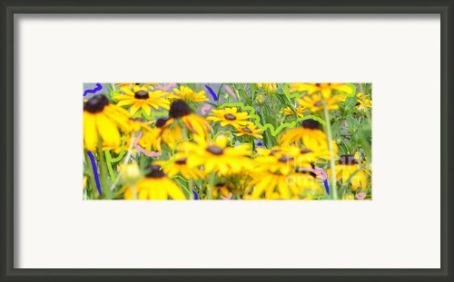 Sweet William Framed Print By Karen Francis