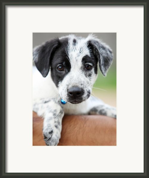 Sweetness Framed Print By Amanda Barcon