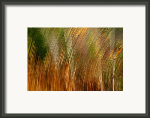 Sylvan Meld Framed Print By Bill Morgenstern