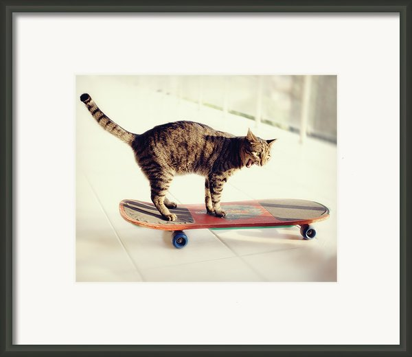 Tabby Cat On Skateboard Framed Print By Hulya Ozkok