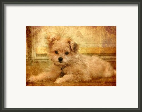 Taking A Break Framed Print By Angie Mckenzie