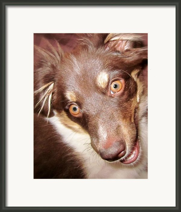 Talking Dog Framed Print By Gwyn Newcombe