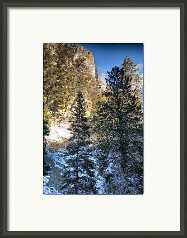 Tall Trees Framed Print By Lisa  Spencer