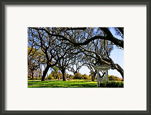 Tangled Framed Print By Kristin Elmquist