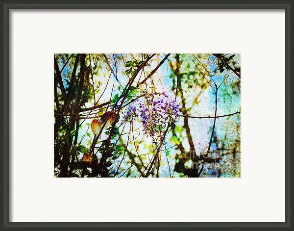 Tangled Wisteria Framed Print By Andee Photography