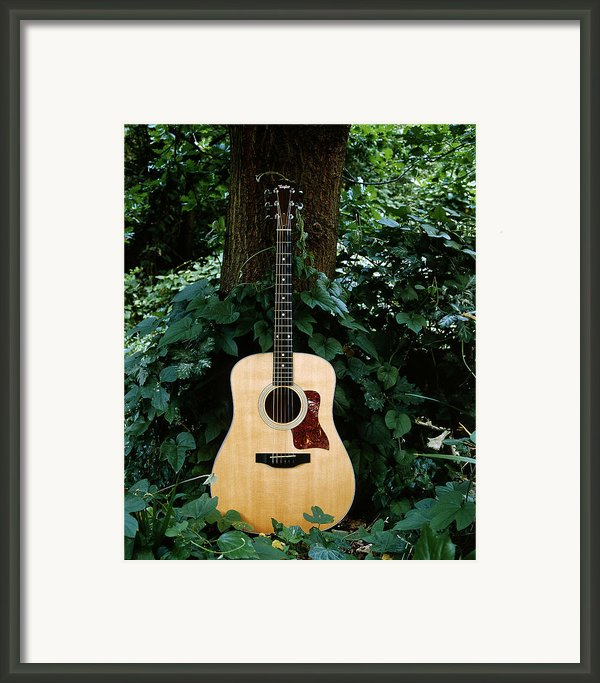 Taylor Framed Print By Tim Nichols